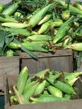 sprzedaż kukurydzana Obrazy Stock