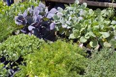 sprzedaży roślin Fotografia Royalty Free