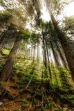 Spätsommersonnenlicht, das durch die Bäume an einem mystischen Weg bricht Stockfotografie
