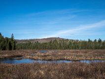 Spuce Bog Boardwalk Stock Photo