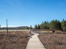 Spuce Bog Boardwalk. Algonquin Provincial Park Ontario stock photography
