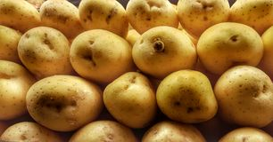 Spuds. A shot of potatoes on display Royalty Free Stock Photos