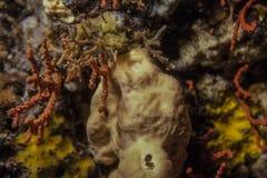 Spugna del mare e corallo rosso sulla scogliera fotografia stock