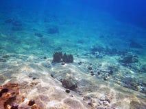 Spugna del mare nel mare adriatico Fotografia Stock Libera da Diritti