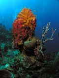 Spugna e piante in 50 ft di acqua sull'orlo dell'abisso Fotografia Stock Libera da Diritti