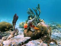 Spugne del corallo e del mare di cervello Immagini Stock Libere da Diritti