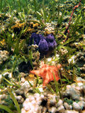Spugne del mare e delle stelle marine Fotografia Stock