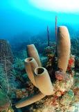 Spugne del tubo e barriera corallina Immagini Stock