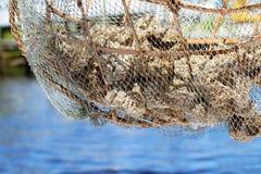 Spugne naturali del mare Fotografia Stock