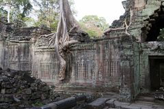 Spungs-Baum wurzelt die Einhüllung der verzierten Wand an des 12. Jahrhunderts Tempel Preah Khan Lizenzfreies Stockfoto