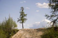 Spur ?ber gr?nem Wald mit Kiefern, Fichten, L?rchen und Birken Weg, Weise, Bahn, Weg Heller Sommertag mit blauem Himmel Tr lizenzfreies stockbild