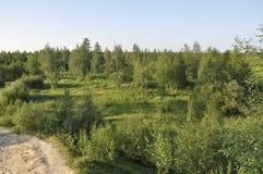 Spur ?ber gr?nem Wald mit Kiefern, Fichten, L?rchen und Birken Weg, Weise, Bahn, Weg Heller Sommertag mit blauem Himmel Tr stockbild