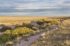 Spur über Grasland Lizenzfreie Stockbilder