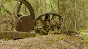 Spur of ancient gear. At taiga forest stock footage