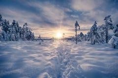 Spur auf einem Schnee, der in Richtung zum Sonnenuntergang führt stockbilder