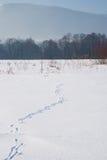 Spur auf schneebedecktem Feld Stockfotografie