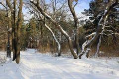 Spur auf Winterwald Lizenzfreie Stockfotos