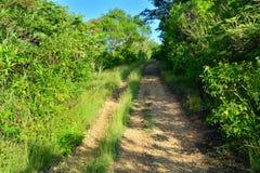 Spur in Chiapas, Mexiko lizenzfreies stockbild