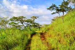 Spur in Chiapas, Mexiko lizenzfreie stockfotos