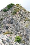 Spur in den Alpen Lizenzfreie Stockfotografie