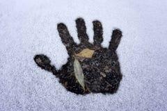 Spur der Hand und Spur des Hundes auf weißem Schnee, Draufsicht stockfotos