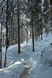Spur in der schneebedeckten Waldlandschaft Stockfotos
