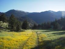 Spur durch Blumen Lizenzfreie Stockfotografie