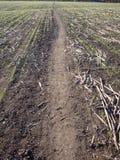 Spur durch den Feldhintergrund nach Ernte stockbild
