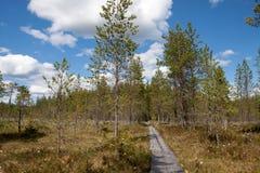 Spur durch den Sumpfwald Stockfotos