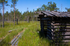 Spur durch den Sumpfwald Lizenzfreie Stockfotos