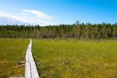 Spur durch den Sumpfwald Lizenzfreie Stockbilder