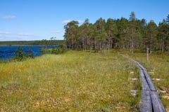 Spur durch den Sumpfwald Stockbild