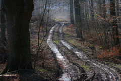 Spur durch den Wald Lizenzfreie Stockfotografie