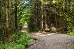 Spur durch einen Wald Stockbild