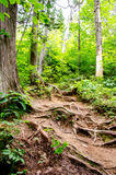 Spur durch einen Wald Lizenzfreies Stockfoto