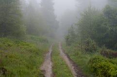 Spur durch einen Wald im Nebel Stockbild