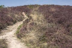 Spur durch Heide im Sommer Lizenzfreie Stockfotos