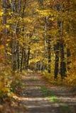 Spur durch Herbstwald Stockbild