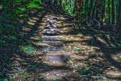 Spur durch hohe Bäume in eine nasse Wald-Zypresse-Fälle parken Britisch-Columbia Kanada Lizenzfreie Stockbilder