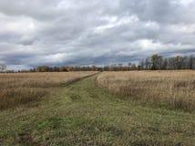 Spur durch Rye-Felder Stockbild