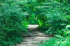 Spur durch Sommer-Wald Lizenzfreies Stockfoto