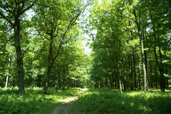 Spur durch Wald