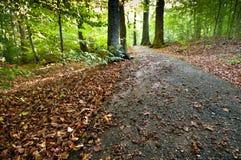 Spur in einem Wald Stockfotos