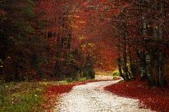 Spur in einem Wald während des Herbstes lizenzfreies stockfoto