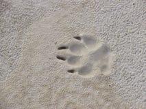 Spur einer Hundetatze auf Sand Lizenzfreies Stockfoto