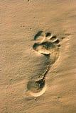 Spur eines menschlichen Fusses im Sand Lizenzfreie Stockfotos
