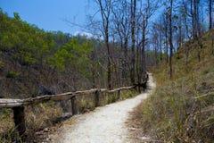 Spur im Berg und im Wald Lizenzfreie Stockfotos
