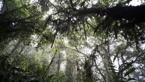 Spur im Dschungel stock footage