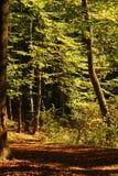 Spur im Herbstwald Stockbilder