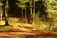 Spur im Herbstwald Stockfoto